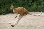 kangoorou.jpg