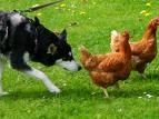 chiens renifleurs.jpg