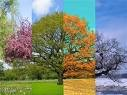 vivaldi 4 saisons.jpg
